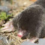 Mole, Vole & Shrew Removal